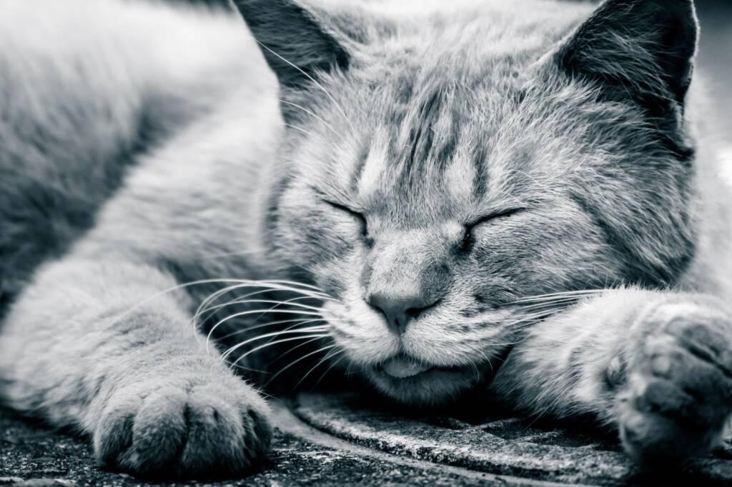 睡眠不足と仕事効率