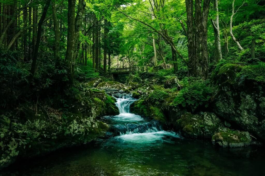 深い森と白賀渓谷(鏡野町)